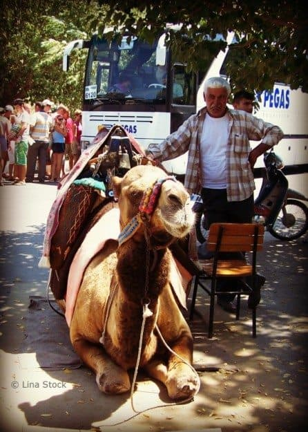 Kusadasi Turkey Camel