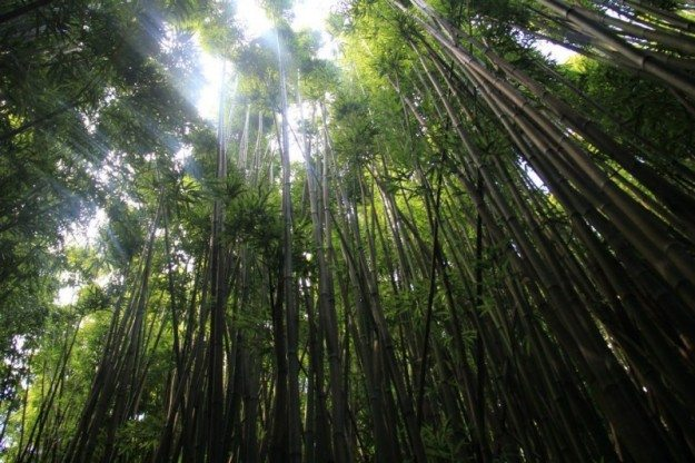 Road to Hana Waimoku Falls Hike Bamboo Forest- Divergent Travelers