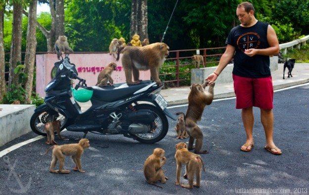 Phuket Thailand Monkeys