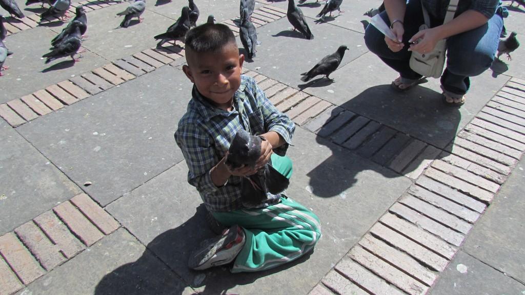 Pigeons of Bogota