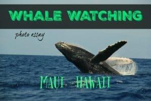 whalewatchingmaui