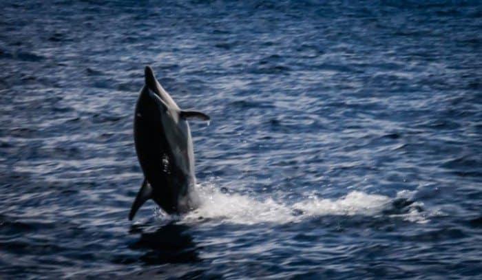 Dolphin Encounter Tauranga