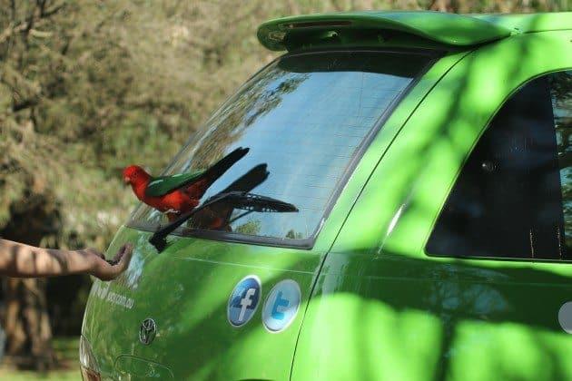 Great Ocean Road Australia Parrot Jucy World Van