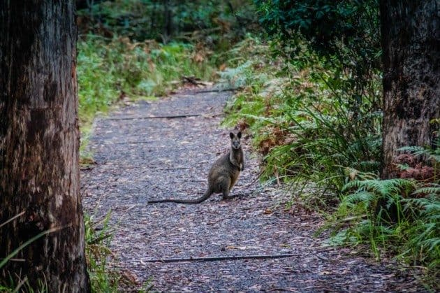 Booderee National Park Australia