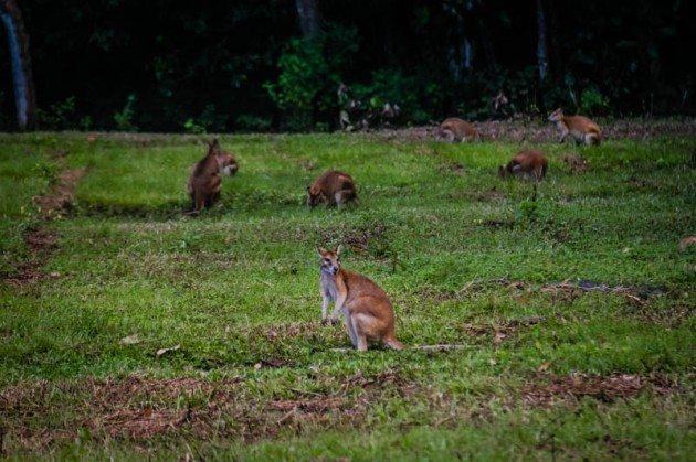 Atherton Tablelands wildlife