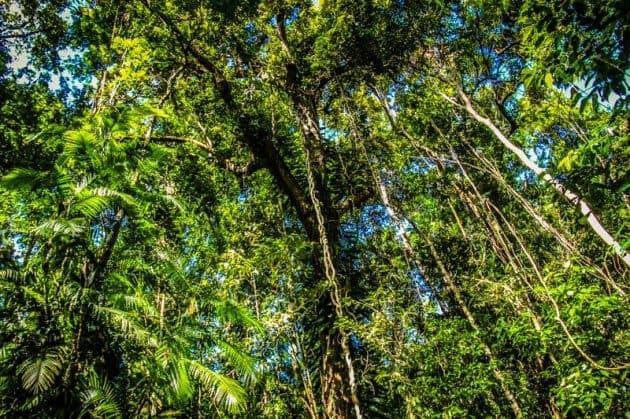 Daintree Rainforest Cassowary Hiking