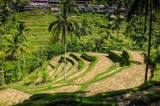 Tegalalong Rice Terraces Ubud Bali