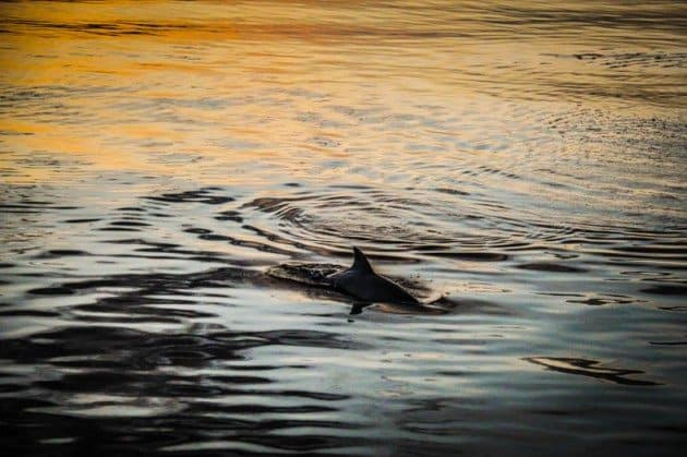 Dolphin Sunset Indonesia Kencana Adventure