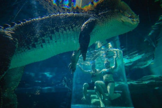 Cage of Death Crocodile Darwin Australia Divergent Travelers adventure bucket list