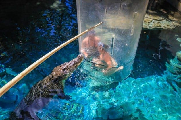 Cage of Death Crocodile Darwin Australia Divergent Travelers