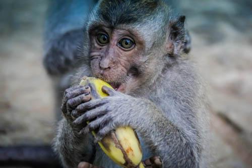 Sacred Monkey Forest Temple Ubud Bali