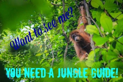 Jungle Guide Sumatra Bukit Lawang