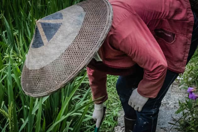 Hiking Rice Terraces Guilin China