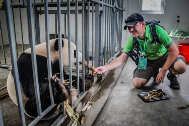 Giant Panda Volunteer Program China