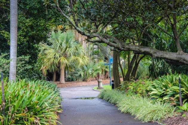 Royal Botanical Gardens Top Things to do in Sydney