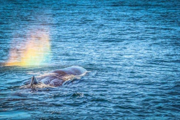 Sperm Whale Kaikoura New Zealand