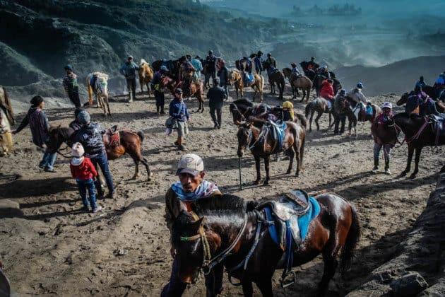 Ponies Mount Bromo Indonesia