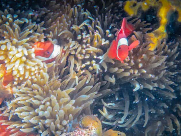 Crowning Glory Reef Culion Philippines