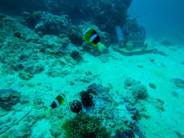 PADI Advanced Open Water Nemo