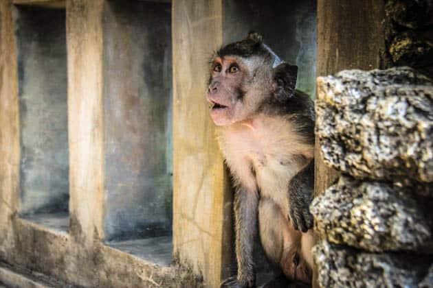 Uluwatu Temple Monkey Indonesia