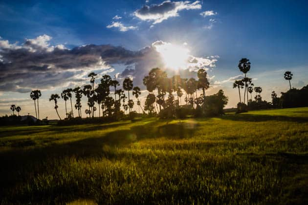 Palm Sunsets Siem Reap Cambodia
