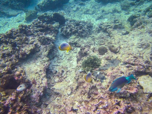 Snorkeling Self Guided Kayak tour of phi phi islands