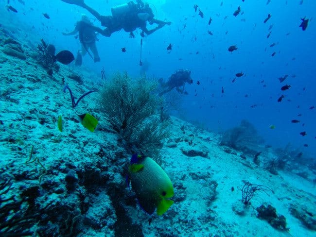 Scuba diving Maldives Divergent Travelers