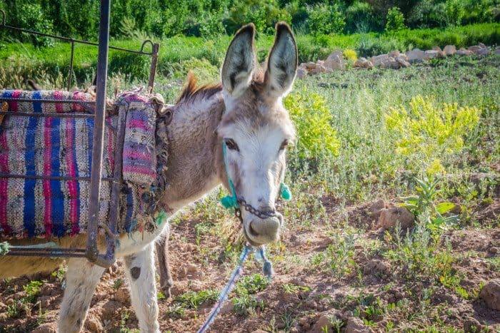 Hiking Midelt Morocco Berber Donkey