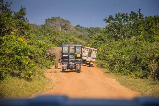 Yala National Park Sri Lanka Elephant