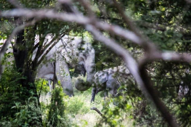 Yala National Park Sri Lanka Elephants