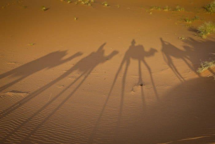 CAmel Safari Sahara Desert Morocco