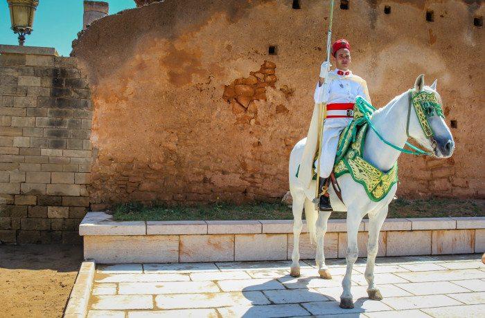 Horse in Rabat Visit Morocco