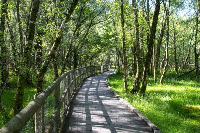 Wicklow Mountain Hiking Ireland