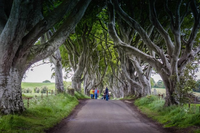 Dark Hedges Game of Thrones Ireland