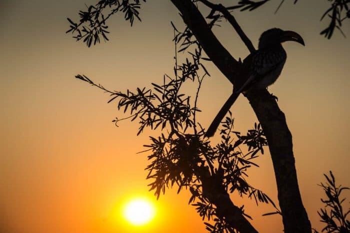 Elephant Sands Camping Botswana Hornbill Sunrise