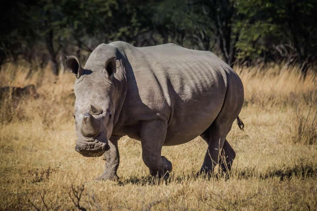 Rhino Trekking Zimbabwe