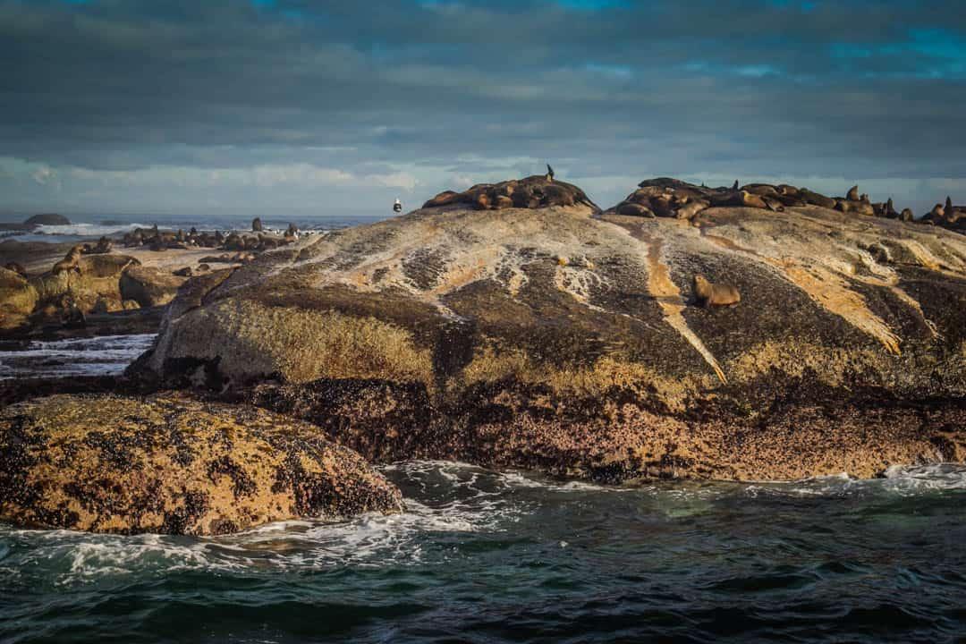Duiker Island Hout Bay