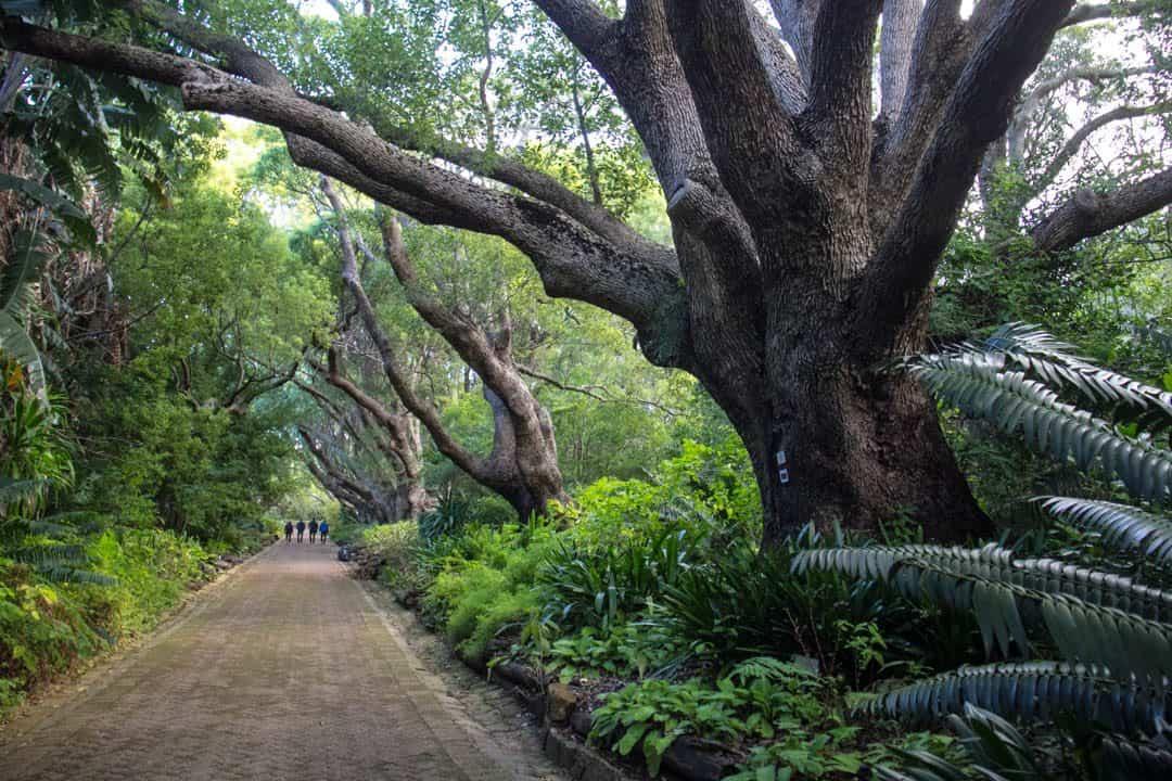 Kirstenbosch Garden South Africa