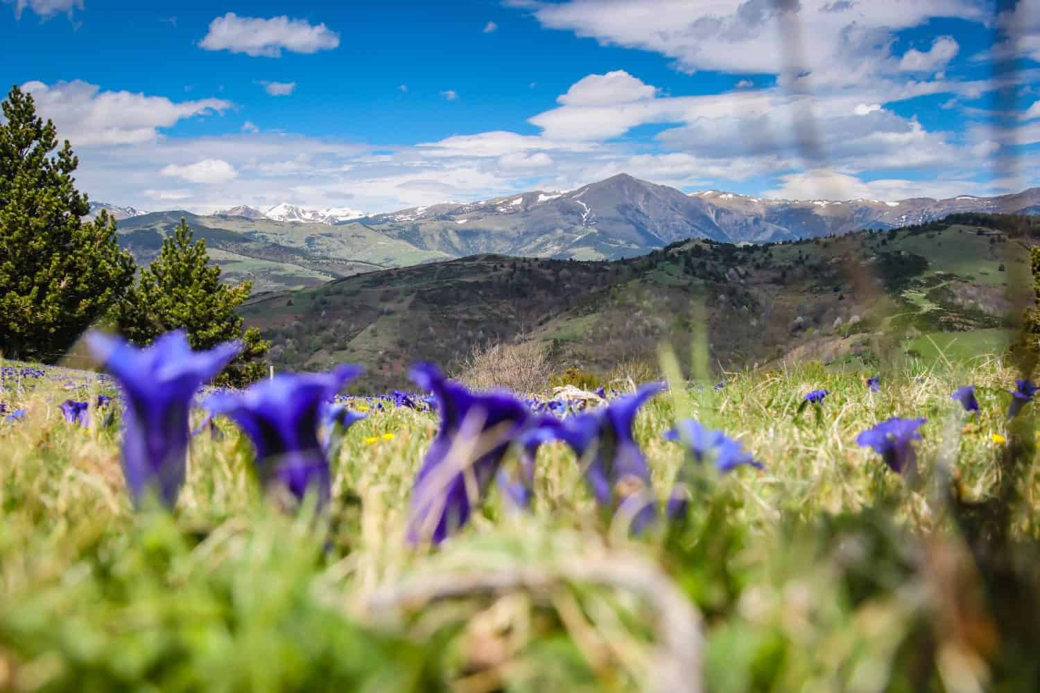Pyrennes Mountains Spain