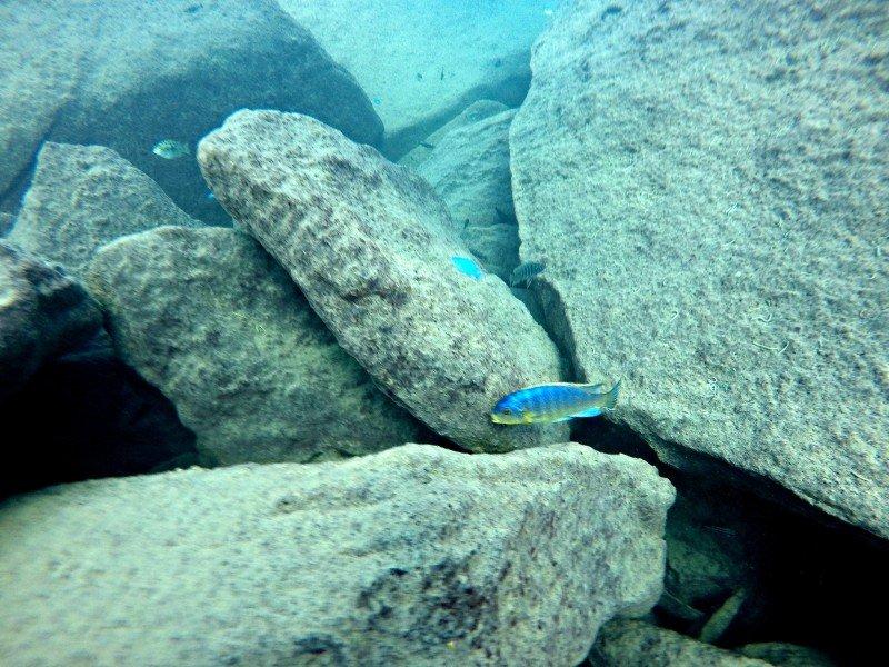 Lake Malawi Scuba Diving