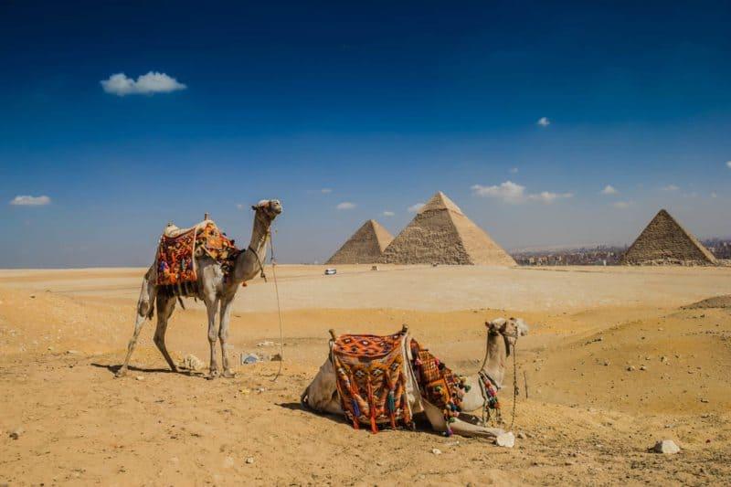 Camels Pyramids of Giza Cairo Egypt