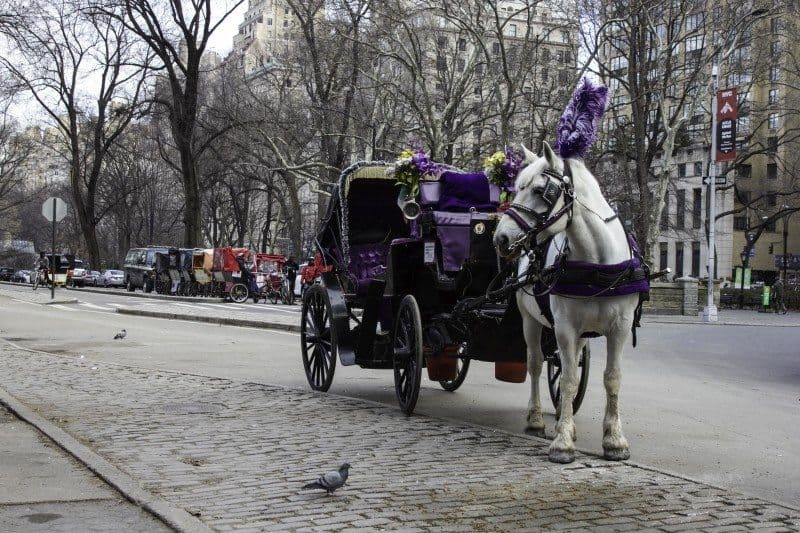 Horse Carriage Central Park New York City