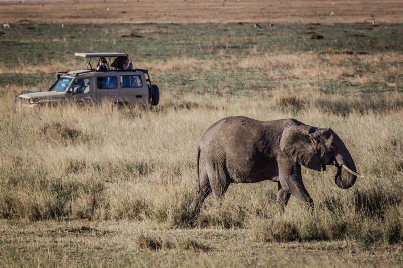 African Elephant Serengeti Safari Tanzania