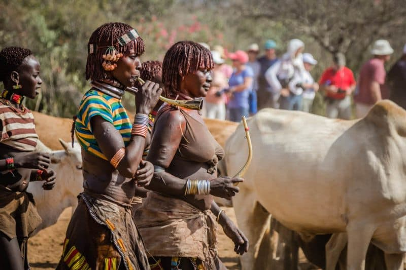 Harmer Tribe Bull Jumping Ceremony Ethiopia