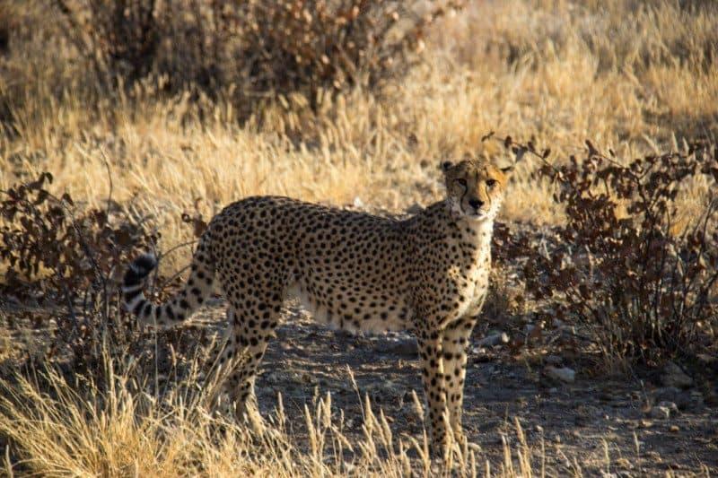 Cheetah Park Namibia Cape Town to Nairobi