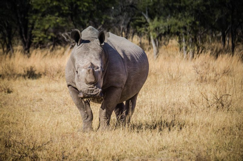 Rhino Tracking Zimbabwe