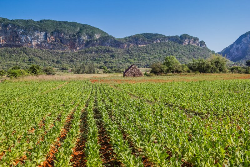 Tobacco Field Vinales Two Week Cuba Itinerary