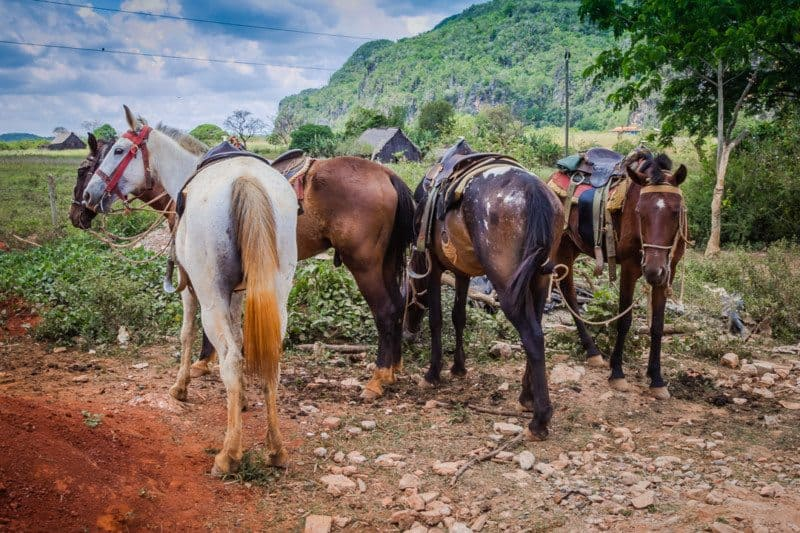 Horse Riding in Vinales Cuba