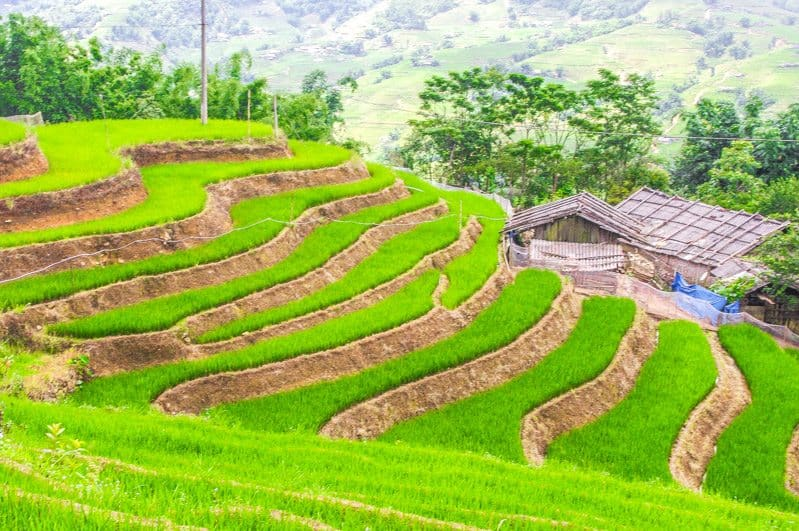 Southeast Asia adventures Sapa Valley Hiking Rice Fields in Vietnam