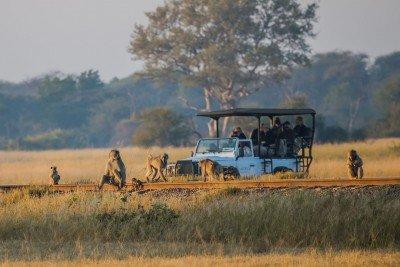 Zimbabwe Safari - Imvelo Safari Lodges - Lina Stock